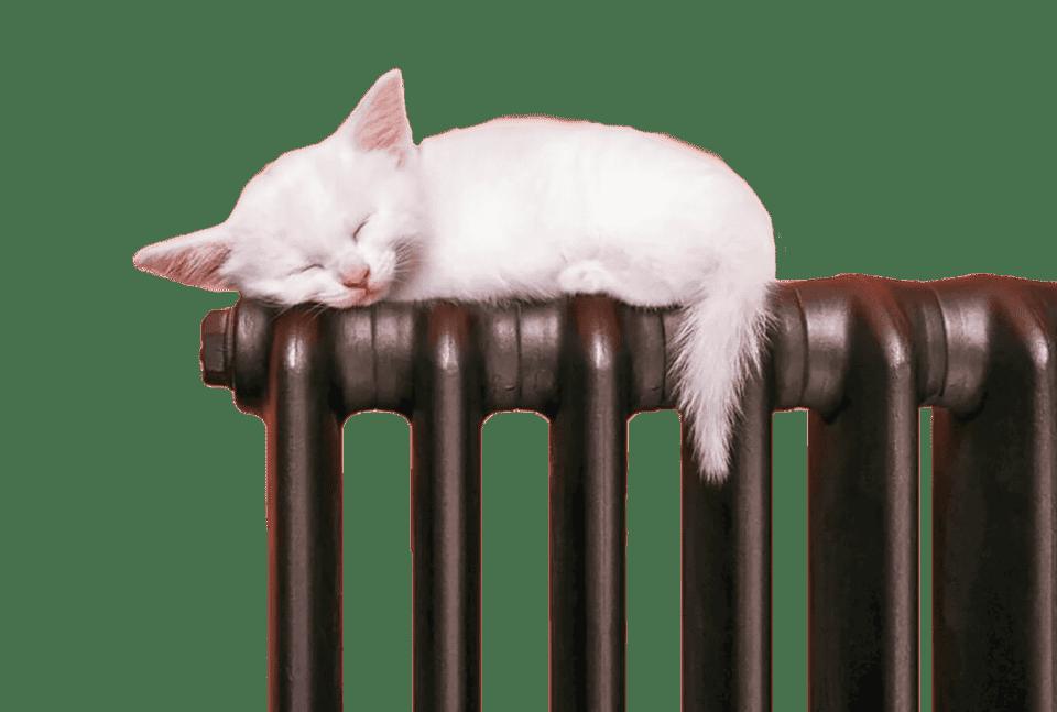 Радиатор с котенком